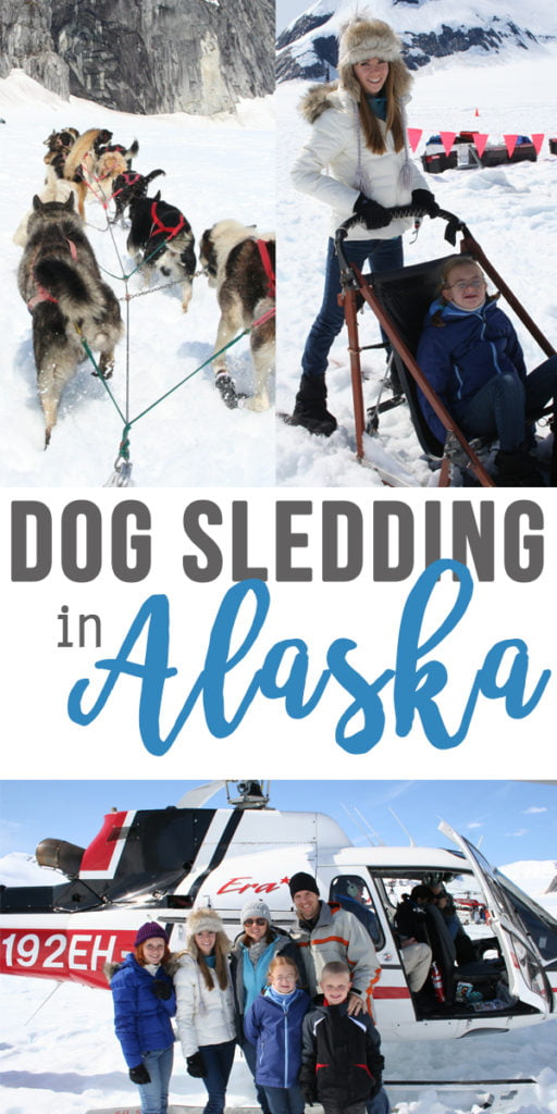 Dog sledding in Alaska | a mom's review