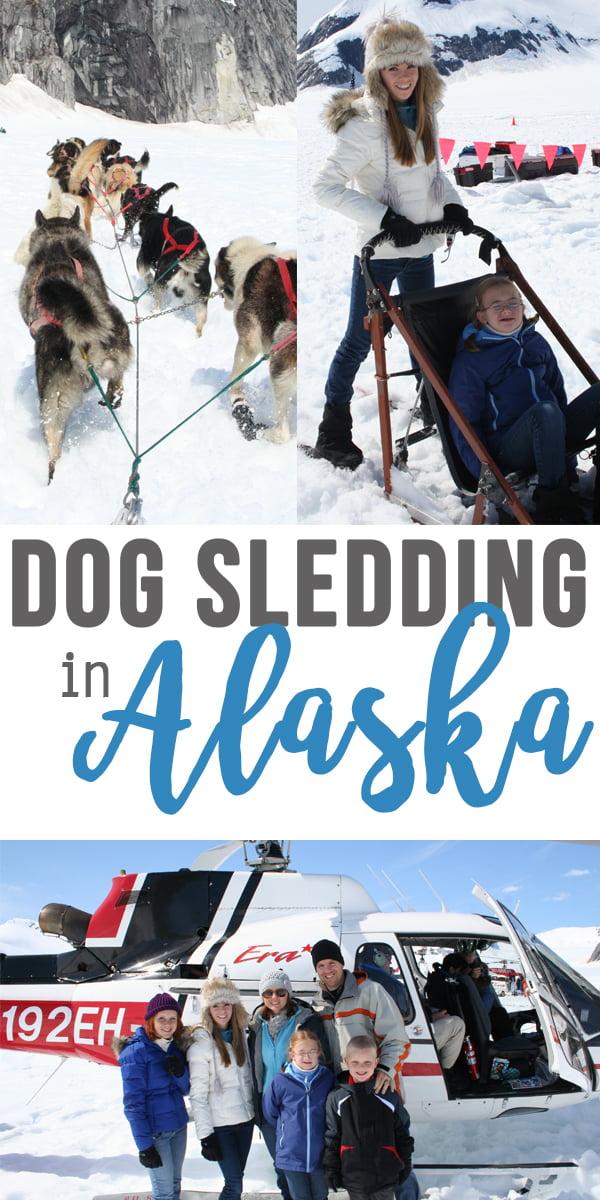 Dog sledding in Alaska | a mom's review