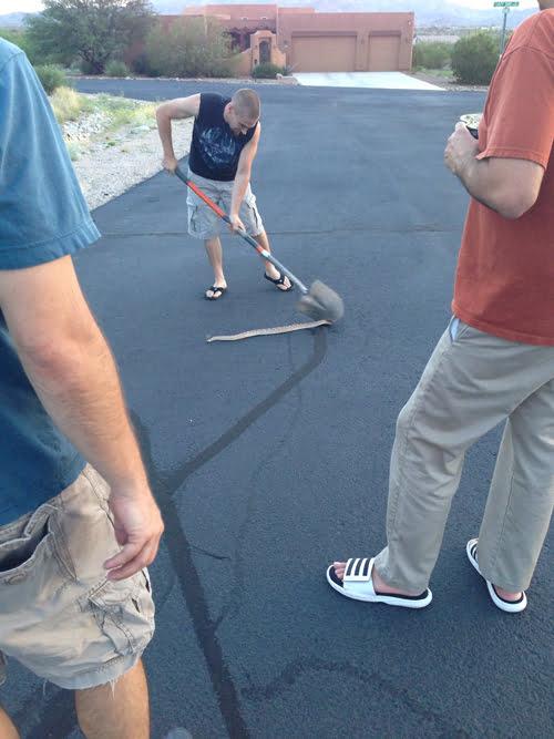 snakebeaheading