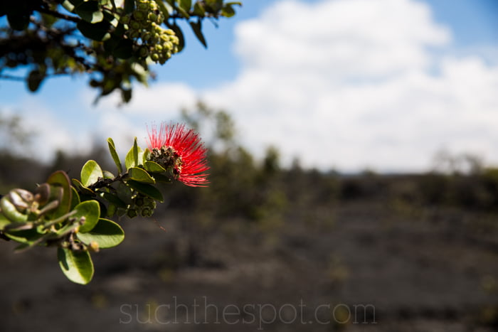 Native Guide Hawaii, Volcano National Park Tour Review | Such the Spot