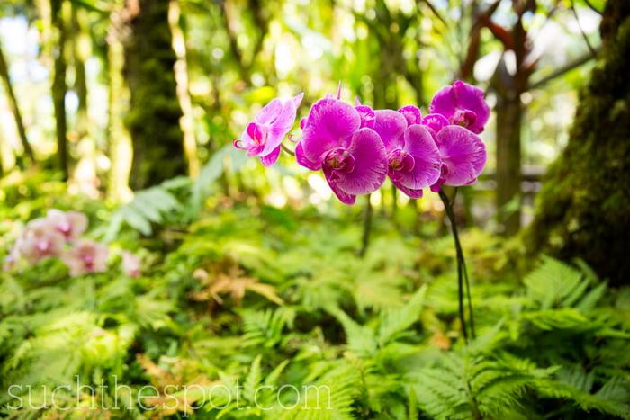 Hawaii Tropical Botanical Garden review | Such the Spot