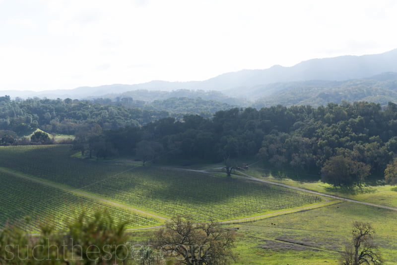 Two unique ways to tour the vineyards of Paso Robles   Such the Spot
