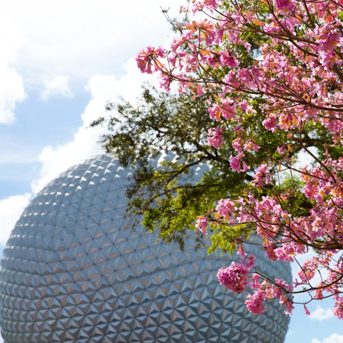A day at the Epcot Flower and Garden Festival
