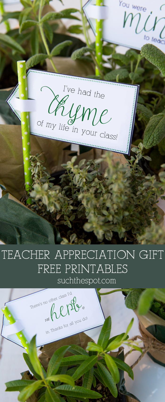 Teacher Appreciation Gift & Free Printable