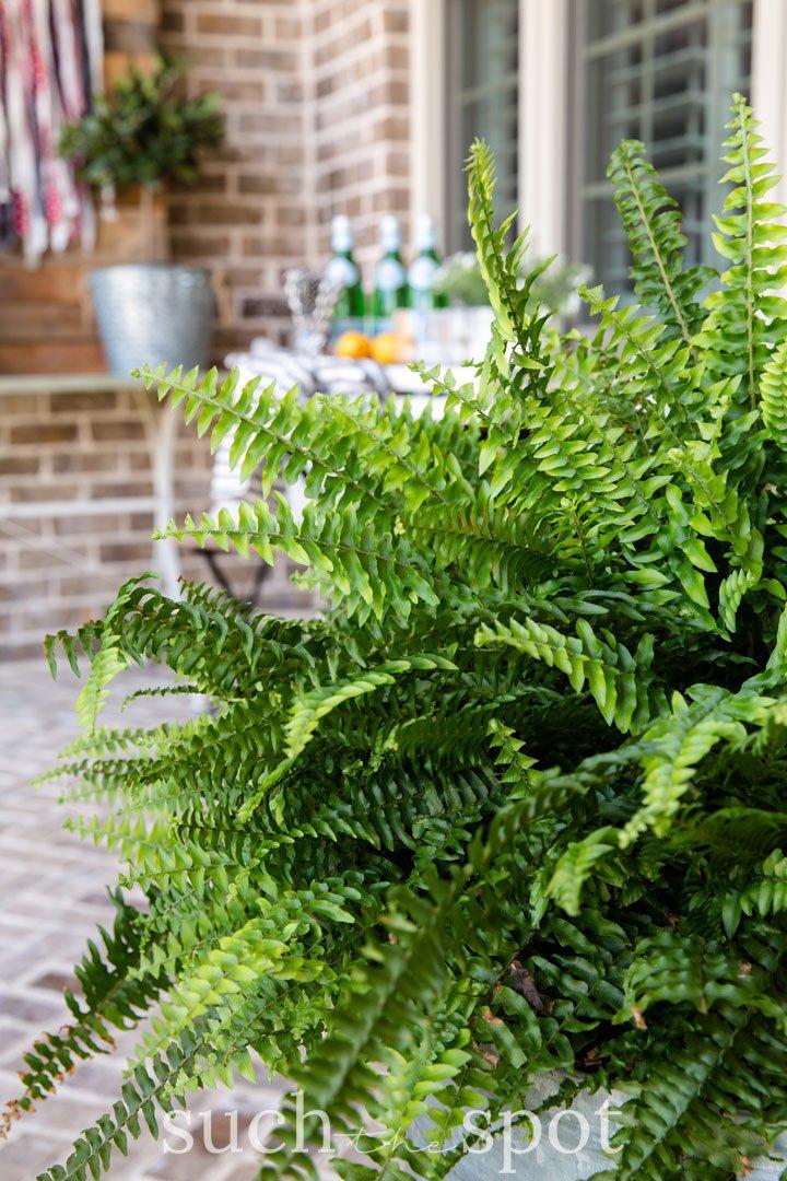 summer front porch fern